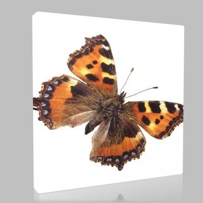 Çita Desenli Kelebek Kanvas Tablo