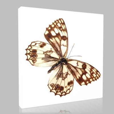 Şeffaf Kelebek Kanvas Tablo