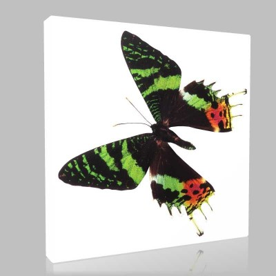 Şekilli Kelebek Kanvas Tablo