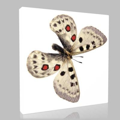 Beyaz Kelebek Kanvas Tablo