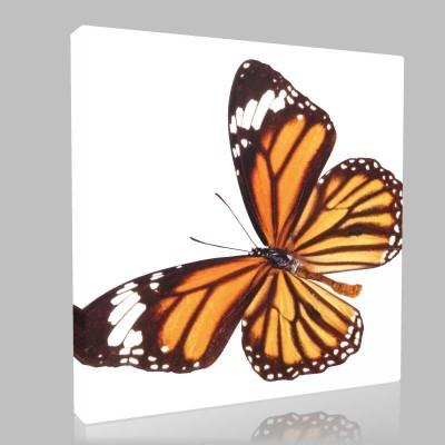 Desenli Kelebek Kanvas Tablo
