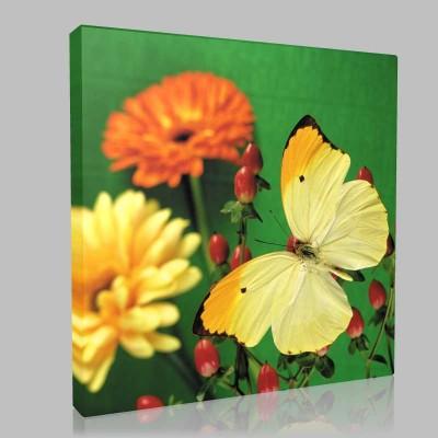 Doğada Kelebek 1 Kanvas Tablo