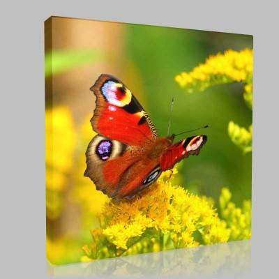 Kırmızı Kelebek Kanvas Tablo