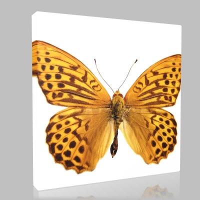 Leopar Desenli Kelebek Kanvas Tablo