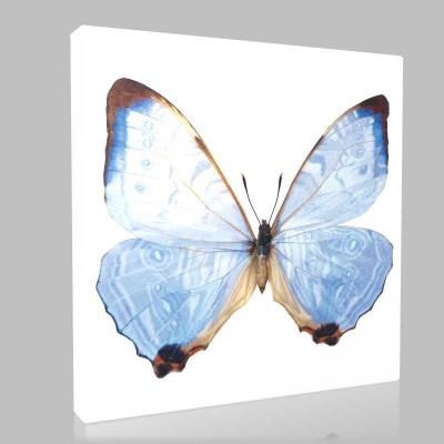 Mavi Kelebek Kanvas Tablo