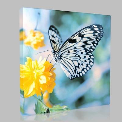 Siyah Beyaz Benekli Kelebek Kanvas Tablo