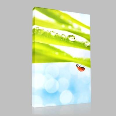 Ters Görünen Uğurböceği Kanvas Tablo