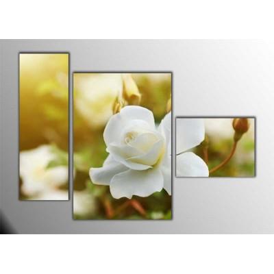 Beyaz Güller Parçalı Tablo 120X85Cm