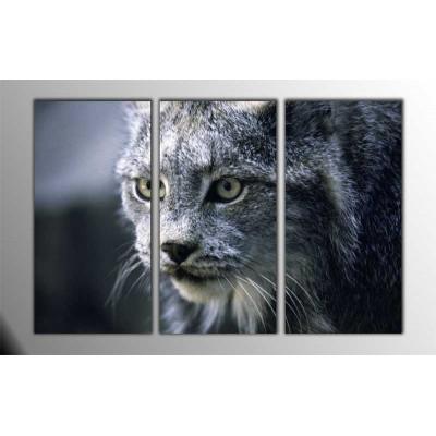 Büyük Kedi Parçalı Tablo 120X80Cm