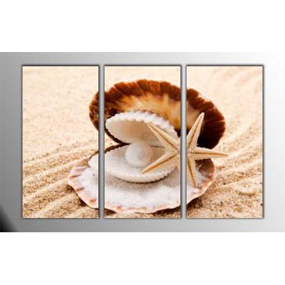 Sea Shells Parçalı Tablo 120X80Cm