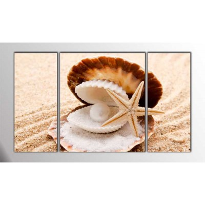 Sea Shells  Parçalı Tablo 120X70Cm
