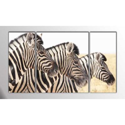 Zebra Kardeşliği Parçalı Tablo 120X70Cm