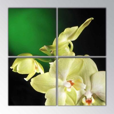 Yeni Açan Orkide Parçalı Tablo 100 X100Cm